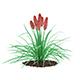 Kniphofia Plant (Tritoma)