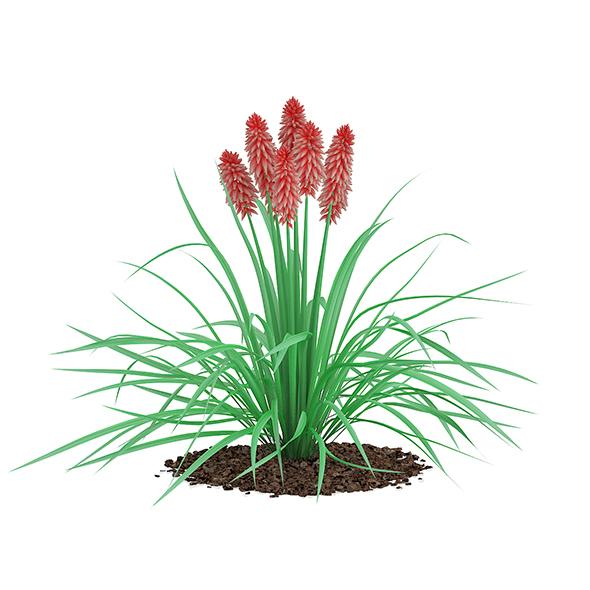 Kniphofia Plant (Tritoma) - 3DOcean Item for Sale