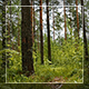 Into The Wood   - VideoHive Item for Sale