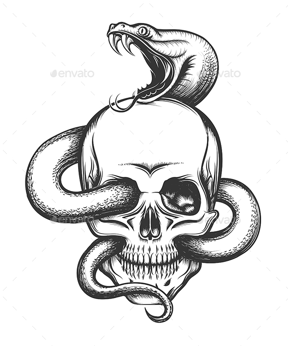Snake And Skull Engraving Illustration