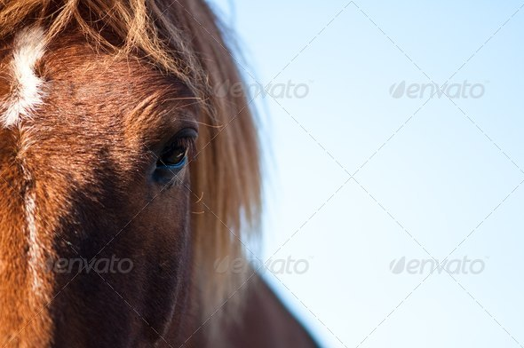 eye of a horse - Stock Photo - Images