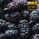 Rotation Mulberry - VideoHive Item for Sale