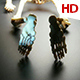 Human Skeleton 0235 - VideoHive Item for Sale
