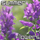 Summer Flowers Garden - VideoHive Item for Sale