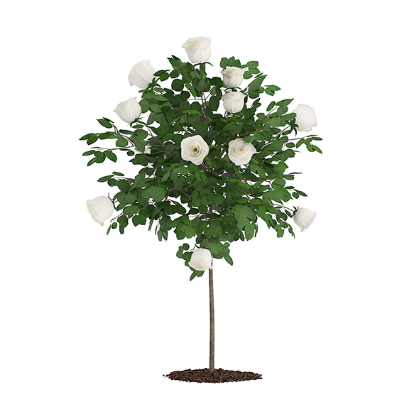 White Rose Tree - 3DOcean Item for Sale