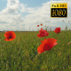 Poppies On The Field - VideoHive Item for Sale