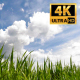 Reeds On A Background Of Clouds - VideoHive Item for Sale