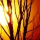 Sun Tree - VideoHive Item for Sale