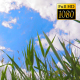 Reeds On A Background Of Clouds 2 - VideoHive Item for Sale