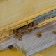 Bees At The Entrance To The Hive  - VideoHive Item for Sale