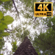 The Tree Foliage Looking Up 7 - VideoHive Item for Sale