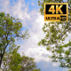 The Tree Foliage Looking Up 9 - VideoHive Item for Sale