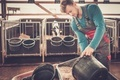 Young farmer feeding calf in the cowshed in dairy farm.