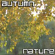 Autumn Nature - VideoHive Item for Sale