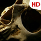 Human Skull 0109 - VideoHive Item for Sale