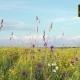 Clouds Pass Over Wild Blue Yellow And White Bonnet Wildflowers - VideoHive Item for Sale
