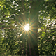 Sun Rays in the Green Forest 1 - VideoHive Item for Sale