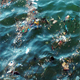 Sea Water Pollution - VideoHive Item for Sale