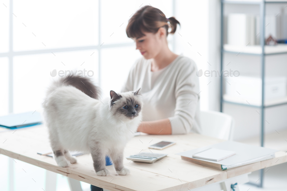 Happy cat on a desktop - Stock Photo - Images