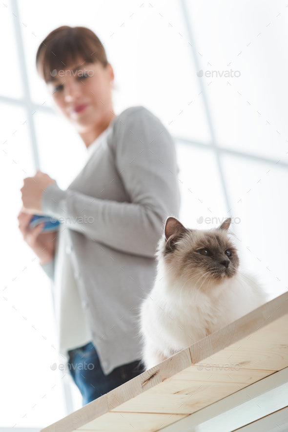 Cat at home - Stock Photo - Images
