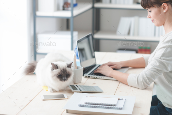 Woman working at desk with her cat - Stock Photo - Images