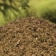 Big Anthill In Wild Forest - VideoHive Item for Sale