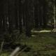 Wilderness Dark Summer Forest  - VideoHive Item for Sale