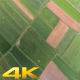 Fields  - VideoHive Item for Sale