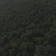 Aerial Above Forest Trees in the Mountains - VideoHive Item for Sale