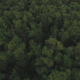 Above Forest Tree Tops at Sunset - VideoHive Item for Sale