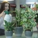 Female Florist Watering Plants At Flower Shop - VideoHive Item for Sale