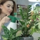 Female Florist Sprays Water on Houseplants at Flower Shop - VideoHive Item for Sale