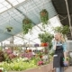 Female Florist Walks Between Flowerbeds At The Garden Centre - VideoHive Item for Sale