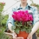 Female Florist Holds The Flowerpot With Pink Flowers At The Garden Centre - VideoHive Item for Sale