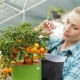 Female Florist Looking At Mandarin Fruits At The Garden Centre - VideoHive Item for Sale