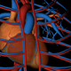 Heart Veins Arteries Circulatory System - VideoHive Item for Sale