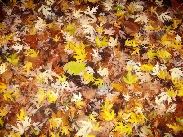 Autumn leaves - Nature Textures