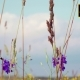 Wildflowers and Plants - VideoHive Item for Sale