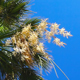 Palm Tree with Flowers and Blue Sky - VideoHive Item for Sale