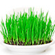 Fresh New Green Grass Rotating On White - VideoHive Item for Sale