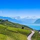 Download Vineyards in Lavaux region - Terrasses de Lavaux terraces, Switz from PhotoDune