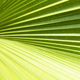 Palm leave texture - GraphicRiver Item for Sale