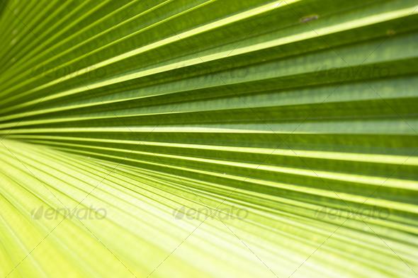 Palm leave texture - Nature Textures
