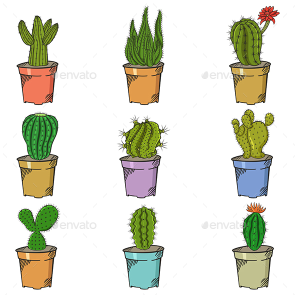 different types of cactus by artisticco graphicriver