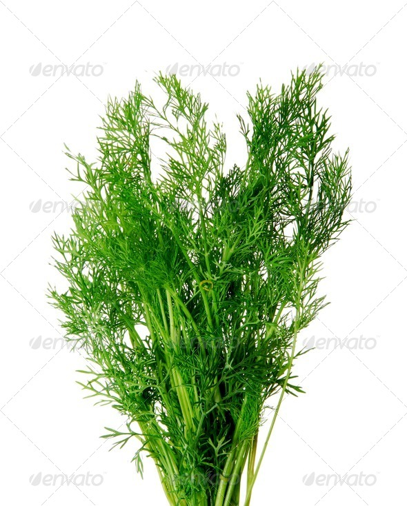 Fresh Dill - Stock Photo - Images