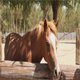 Brown Horse - VideoHive Item for Sale