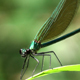 Damsefly - VideoHive Item for Sale