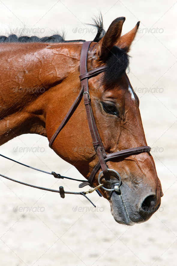 horse head  - Stock Photo - Images