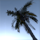 Driving Under Palms - VideoHive Item for Sale