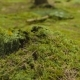 Beetle Crawling On Moss - VideoHive Item for Sale